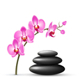 Stack of spa stones with orchid pink flowers vector image