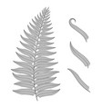 black and white image of a fern leaf vector image vector image