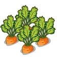 Cultivate tasty carrot vegetable isolated vector image vector image