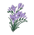 freesia card one element composition vector image vector image