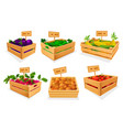 vegetable assortment at market place or store set vector image