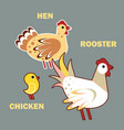 domestic birds rooster hen and chicken on grey vector image vector image