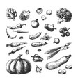 sketch vegetables pumpkin cucumber broccoli vector image
