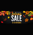 advertising banner about autumn sale at end of vector image vector image