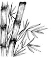 bamboo leaves branches stem black and white vector image