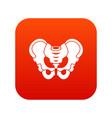 pelvis icon digital red vector image vector image