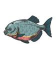 piranha fish sketch engraving vector image vector image