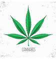 realistic hand drawing cannabis leaf silhouette vector image