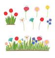 spring flowers growing in garden tulips vector image vector image
