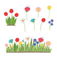 spring flowers growing in the garden tulips vector image