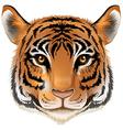 A head of a tiger vector image vector image