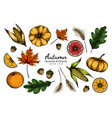 collection set autumn flower and leaves drawing vector image