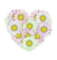 daisies in the shape of a heart vector image