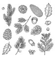 hand drawn spruce branches and cones vector image vector image