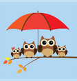 owl family vector image vector image