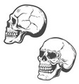 set of the skulls isolated on white background vector image vector image