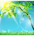 Natural green background with selective focus vector image