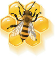 bee and honeycombs vector image vector image