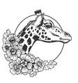 giraffe head animal engraving vector image vector image
