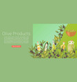 organic olive oil products with olive fruits vector image vector image