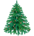 Fir with cones vector image vector image