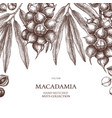 macadamia design hand drawn food template nut vector image vector image