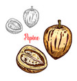 pepino fruit or exotic melon pear sketch design vector image vector image