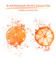 set of watercolor oranges vector image vector image