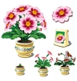 Seeds in bag and stages of growth potted flowers vector image vector image