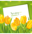 Spring Tulips Flower Background - with Card vector image