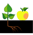 Apple and the hive vector image