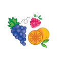 color fruit icon on a white vector image vector image