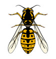 colored sketch a wasp with a top view on a vector image vector image