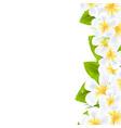 Frangipani Flowers Border vector image vector image