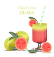 smoothie guava exotic fruits cocktail vector image vector image