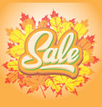 template for design advertising on autumn vector image vector image