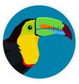 wild birds keel-billed toucan vector image vector image
