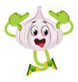crazy garlic on white background vector image