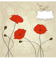 poppies floral background vector image vector image