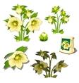 Seeds stages of growth and wilting yellow flowers vector image vector image