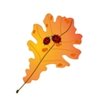 Two cute ladybugs on autumn oak leaf vector image vector image
