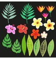Beautiful floral jungle elements Colorful vector image