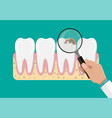 dentist with magnifying glass examines teeth vector image