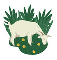 farming today a white goat grazing on a green vector image vector image