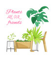 green home plants poster vector image vector image