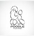 poodle dog design on white background pet animal vector image