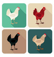 chicken breeds icon set in flat style with shadow vector image vector image