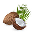 coconut with leaf natural fruit vector image