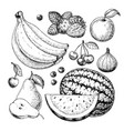 fruit and berry drawing set hand drawn vector image
