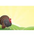 Turkey-cock vector image